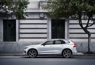 Volvo Car Under Tree